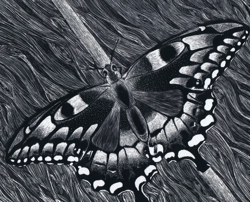 """""""Resting Butterfly"""""""